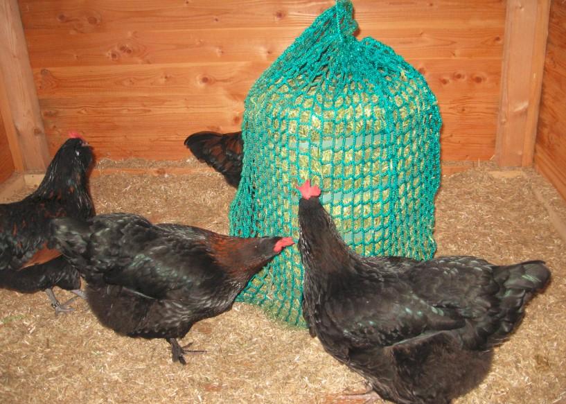 Vogelgrippe – Der aktuelle Stand