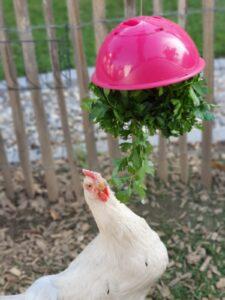 Huhn am Futterball