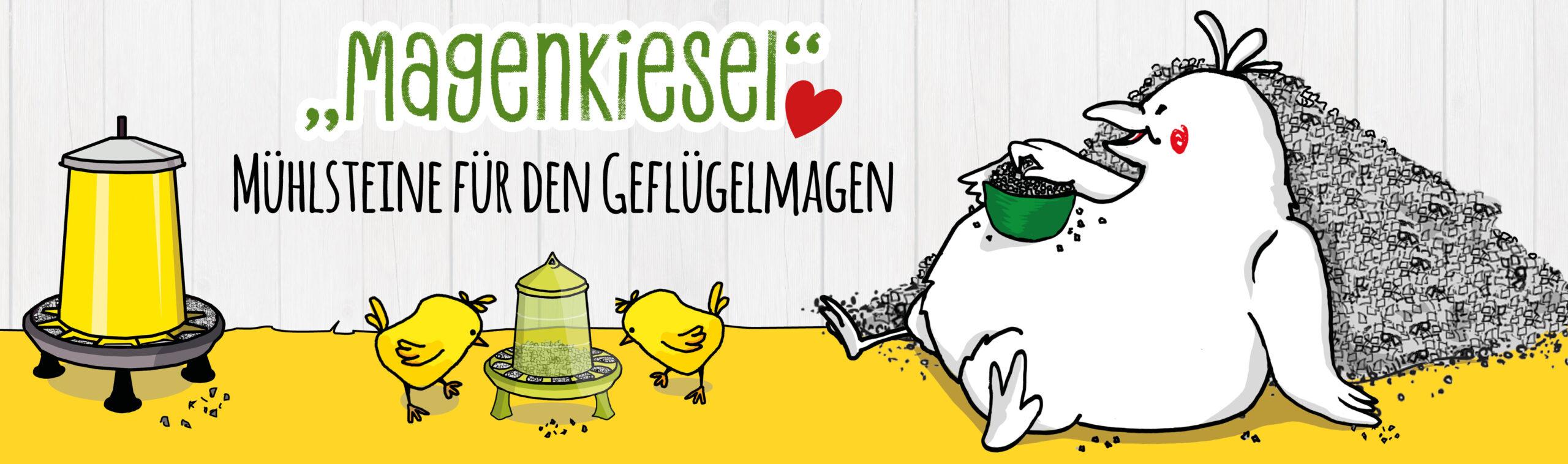 Warum benötigen Hühner Magenkiesel? Wichtig ab dem Kükenalter