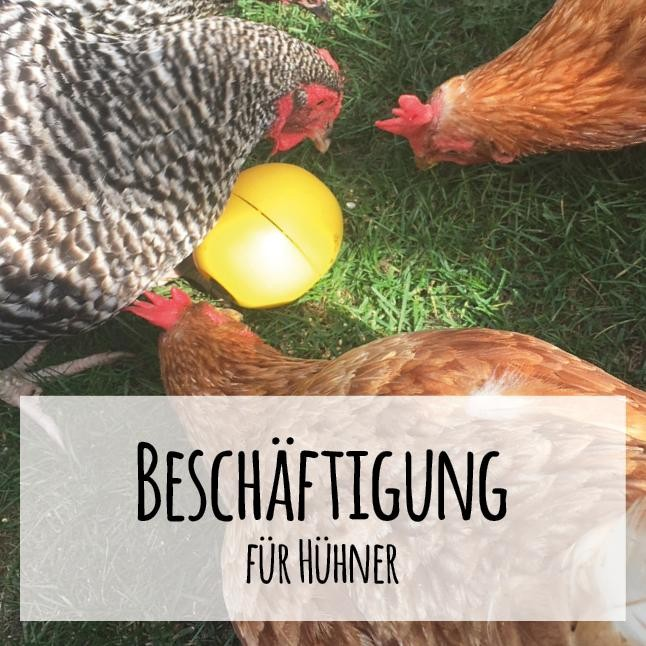 """Hühnerbeschäftigung – natürliche """"Spielzeuge"""" für zufriedene Hühner"""