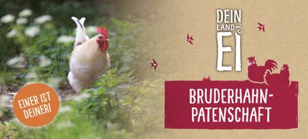 Bio Bruderhahn-Patenschaft bei Dein Land-Ei