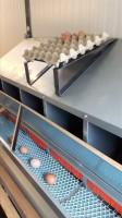 Eierhordenablagegestell für verzinkte Legenester
