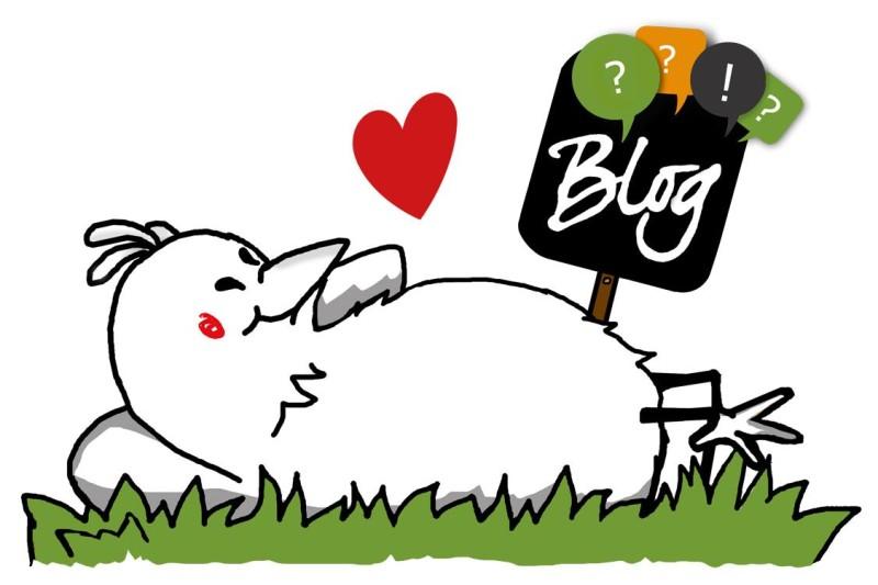 Der Blog mit allen Infos zur Hühnerhaltung!